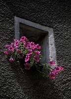Flowers in a French house