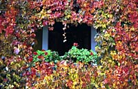 Autumn window, Milan